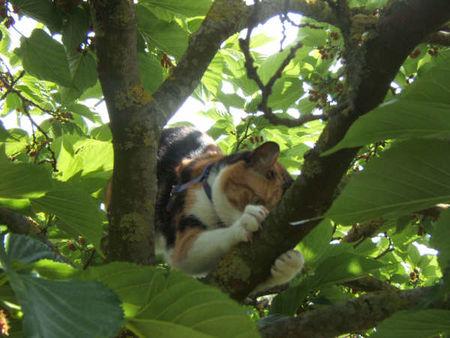 Chatte_arbre5