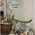 01-cactus land