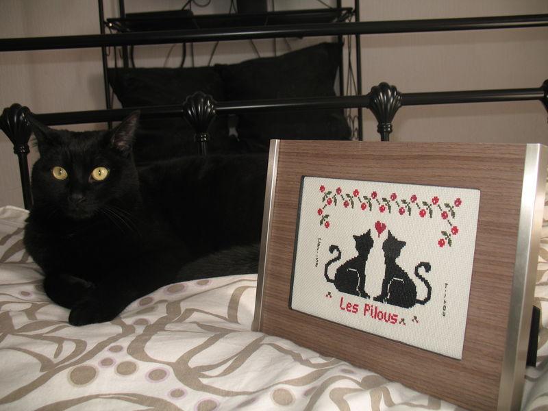 les chats d'Aurélie 1