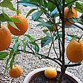 Oranger mars 2012