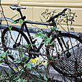 vélo plantes_1134