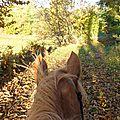 balade liberté - Mesnil Ozenne à cheval (35)