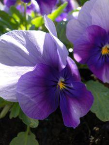 printemps_2010_025