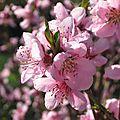 printemps 004