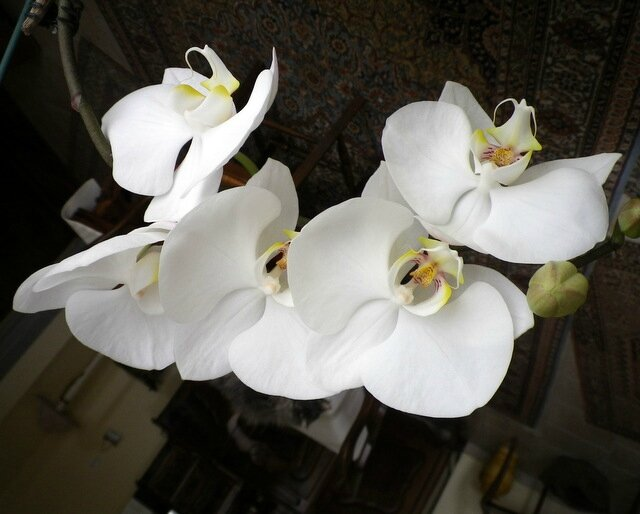 Orchidées 004-001