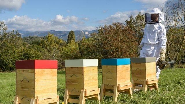 les-ruches-peuplees-de-farmili-contiennent-1-reine-et-10-000-abeilles_5781219