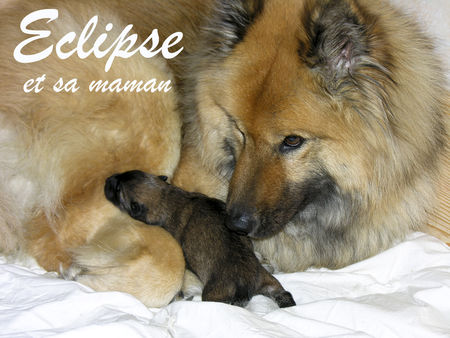 Eclipse_et_sa_maman