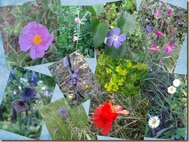 Fleurs des collines
