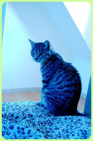 Rouen___Dessins___Chat_003
