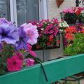jardins fleuris 0330034
