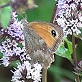 Papillon L'Amaryllis 02