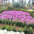 Visite des floralies de bourg en bresse