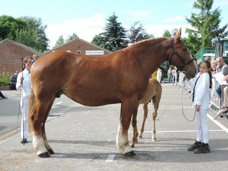 Silvia du Marais - 21 Juin 2016 - Concours d'élevage local - Thérouanne - 7e (Suitées d'âge)