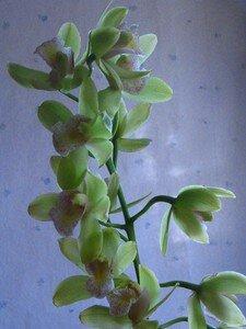 Orchid_e_Chris_No_l_2006
