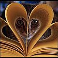 Image du jour - voilà comment lire un roman d'amour...