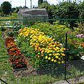 carré des légumes racines