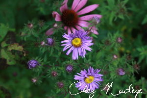 aster_2