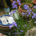 coquillages entre les fleurs