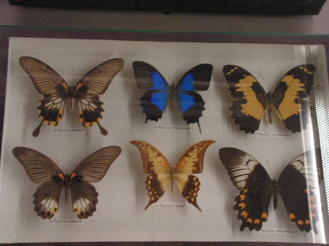 Museum D'histoire Naturelle London Muséum D'histoire Naturelle