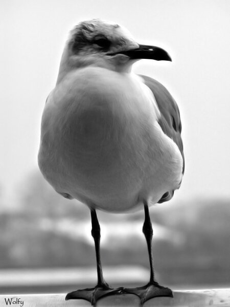 mouette_new_orleans