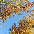 Novembre en or