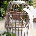 cage à oiseau - 22/07/09