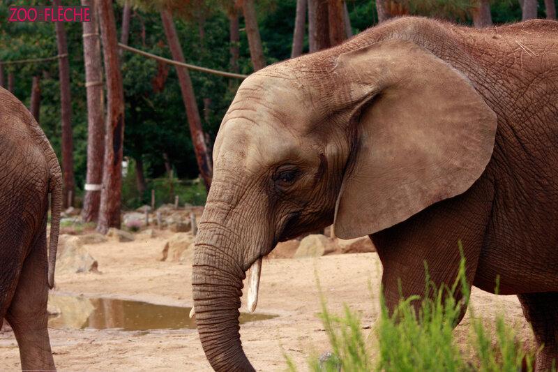 Elephant-(13)HR