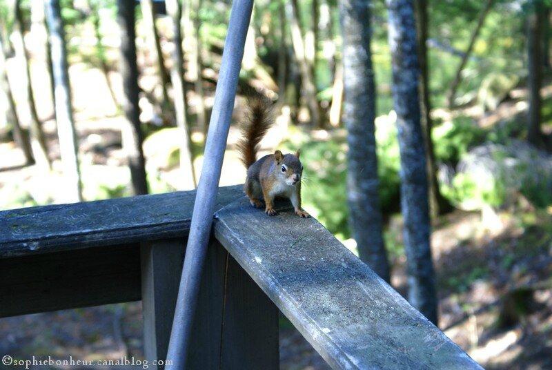 chalet écureuil