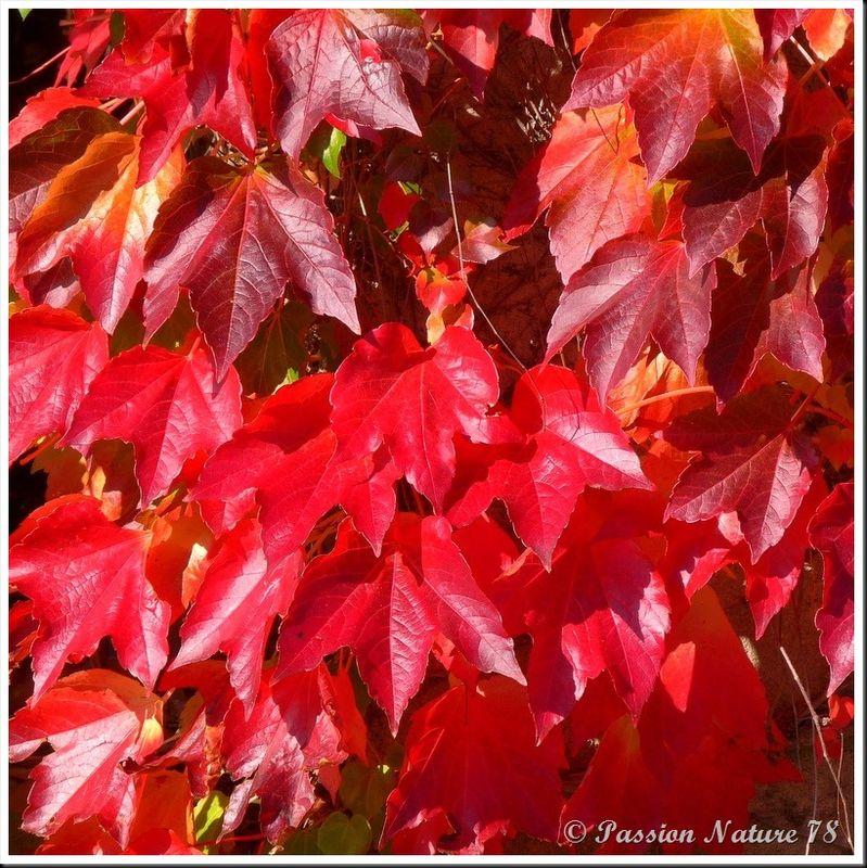 La forêt aux couleurs d'automne (16)