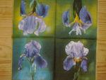 fleurs_040