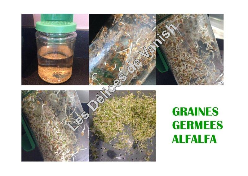 graines germées alfalfa, luzerne, bio