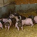 Album photos de la ferme-auberge de pigerolles...