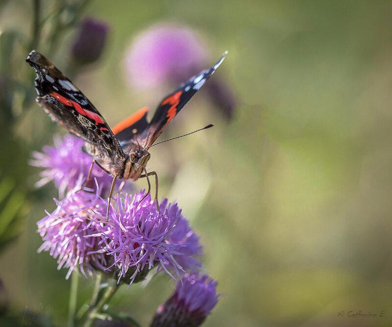 papillon1 r(1 sur 1)