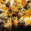 Défense de la nature : la disparition des abeilles sur terre entraînerait aussi la fin de homo sapiens en moins de quatre ans !