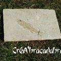 Smerdis (poisson fossilisé du Secondaire)