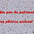 Z-9885 Bande d'Houtkerque 05 avril 2014
