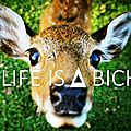 Life is a biche