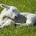 Pourquoi la laine c'est cruel