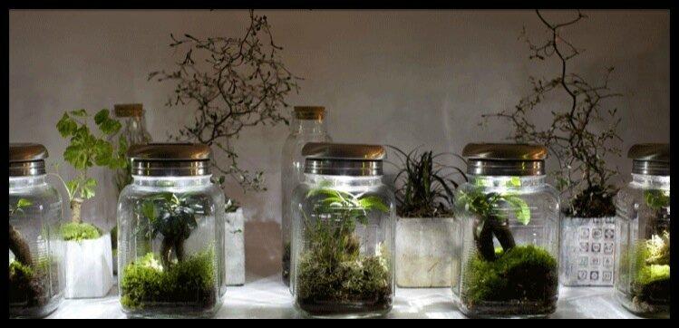 terrarium un jardin de verre dans votre maison treeki le blog de moon. Black Bedroom Furniture Sets. Home Design Ideas