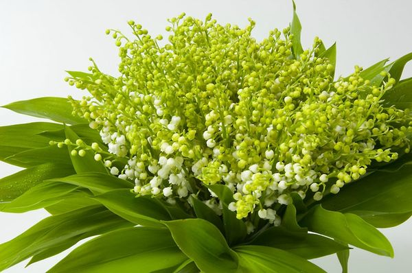 muguet_fleur_1_hd