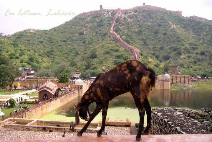 jaipur old city593