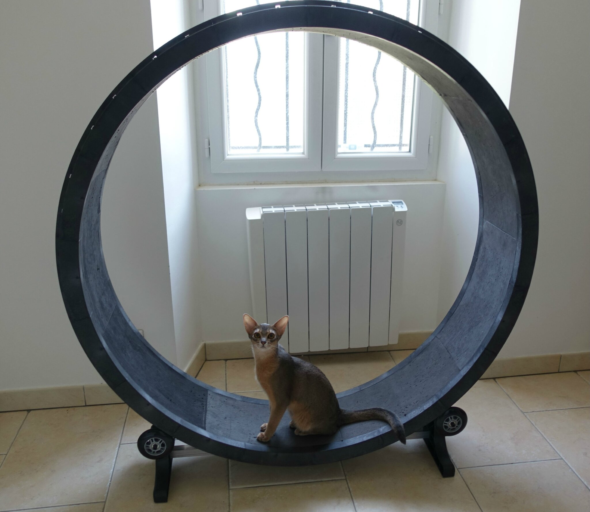 cat wheel ou roue pour chat abyssins d 39 abystyle. Black Bedroom Furniture Sets. Home Design Ideas