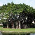 arbre 9