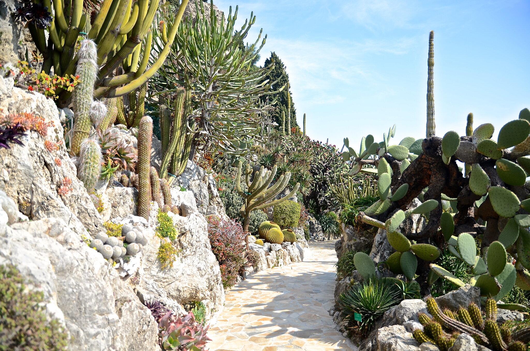Le jardin botanique anemomili for Jardin et plantes