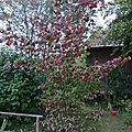 317 - automne au jardin