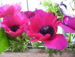 bouquet_anem2_det1