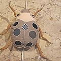 COUTURE DECO : Insecte - La COCCINELLE (Cabinet de curiosités)