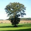 dans ce coin du Morbihan, on respecte les arbres isolés