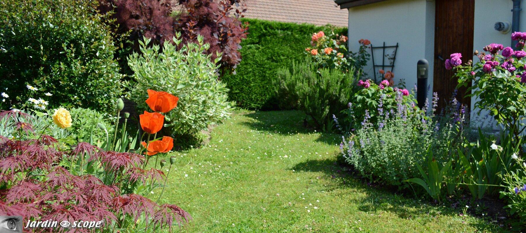 Mon-jardin-mi-juin-1