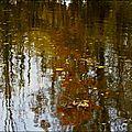 blog reflets d'automne